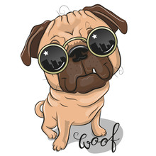 Cute Pug Dog With Sun Glasses