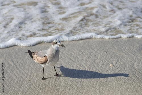 Fotografie, Obraz  Large sea bird Albatross flies over the sea