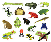 Various Frogs Cartoon Vector I...