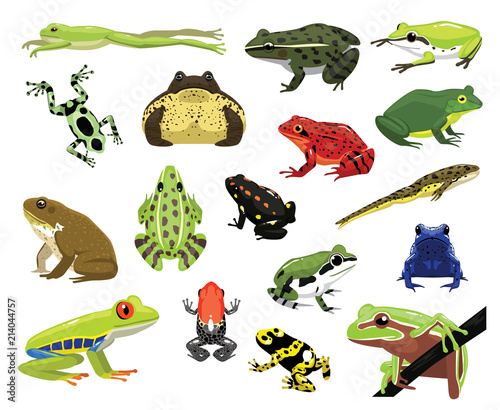 Various Frogs Cartoon Vector Illustration Poster Mural XXL