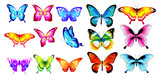Fototapeta Motyle - beautiful color butterflies,set, isolated  on a white