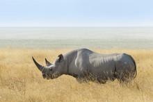 Black Rhino (Diceros Bicornis) At The Edge Of The Etosha Pan, Etosha National Park, Namibia, Africa
