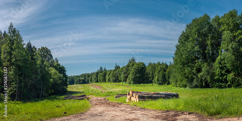 Foto op Canvas Blauwe jeans summer countryside. trunks of cut trees near a road on a field between forests