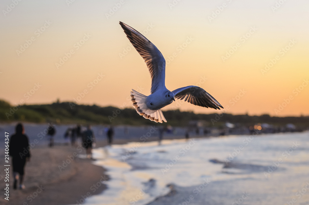 Seagull above Baltic Sea beach in Swinoujscie city, Poland