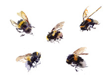 Collection Watercolor Bees Iso...