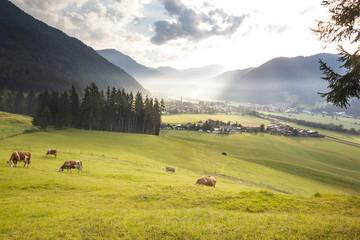 Wunderschöner Sonnenaufgang in den Bergen Tirols mit Kühen auf einer Almwiese - Kirchdorf in Tirol/ Erpfendorf, Tirol, Österreich