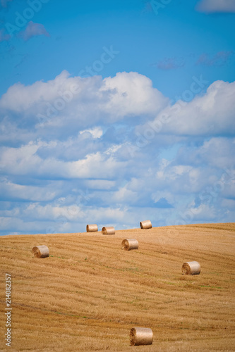 Vászonkép Haystacks on the Field