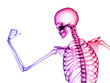 canvas print picture - X RAY SKELETON 3D RENDER