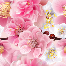 Chinese Plum Flowers Pink Colo...
