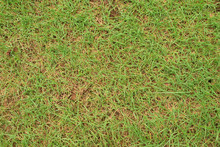 Abstract Background And Texture Of Grass