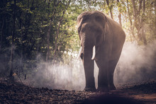 Elephant In The Jungle Of Asia...