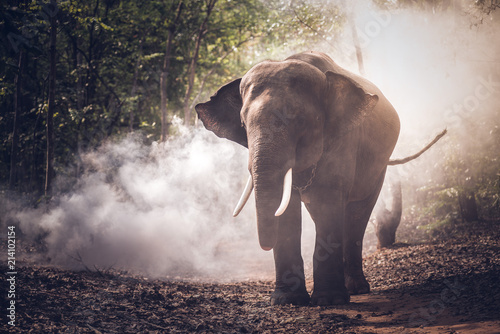 Poster Olifant Elephant in the jungle of Asia, Thailand