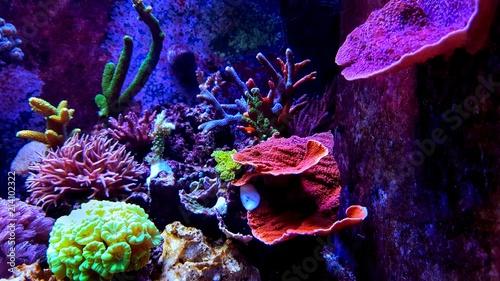Poster Sous-marin Saltwater dream coral reef aquarium tank scene