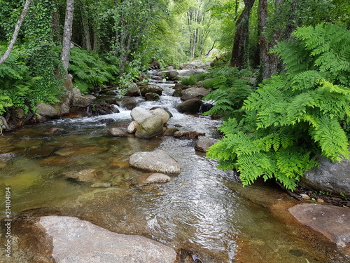 Door stickers Forest river Bosque de rivera, garganta de agua, helechos