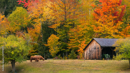 Fall Farm in New England