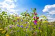 Leinwandbild Motiv Feld mit bunten Sommerblumen