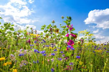 FototapetaFeld mit bunten Sommerblumen