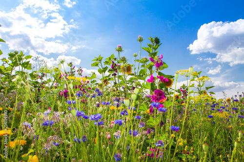 Tuinposter Weide, Moeras Feld mit bunten Sommerblumen