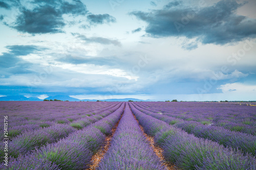Spoed Foto op Canvas Lavendel Lavender fields in France