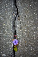 Flowers Bloom In Concrete Crac...