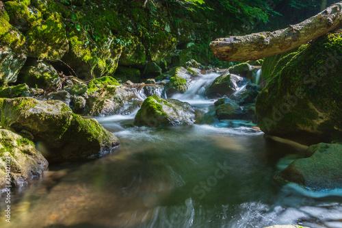 Fototapeten Forest river Fluss in der Natur im Wald bei Sonnenlicht