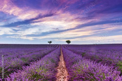 Photo Stands Lavender Crépuscule dans un Champ de lavande à Valensole en Provence, France