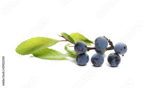 Fényképezés Fresh blackthorn berries with twig, prunus spinosa isolated on white background