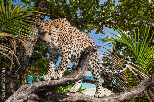 Plakat dżungla lamparta