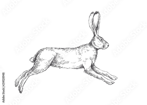 Vector vintage illustration of running hare isolated on white Canvas-taulu