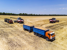 Combine Harvester Harvest Wheat On The Field. Loading In A Truck With A Trailer. Aerial View.
