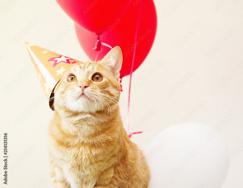 Red cat in a festive cap against the background of balloons. Birthday of a cat.