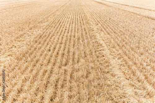Obraz na plátně Abgeerntetes Feld als Hintergrund zum Thema Landwirtschaft