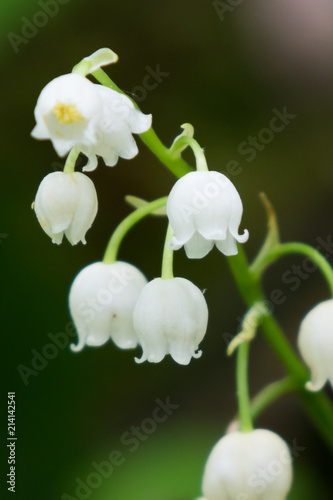 Foto op Canvas Lelietje van dalen Lily of the valley wildflower close-up