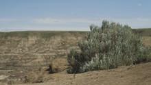 4K Windy Bush In Horse Thief C...