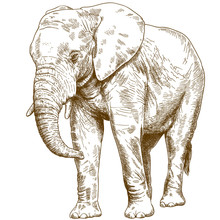 Engraving Drawing Illustration Of Big Elephant