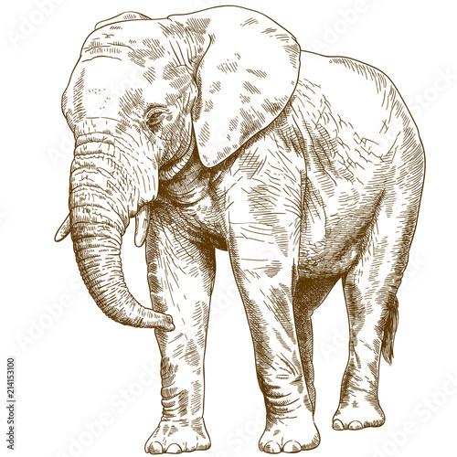 Fototapeta premium grawerowanie rysunek ilustracja wielkiego słonia