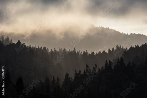 Poster Morning with fog Sunlight and Endless Redwood Forest in Humboldt, California