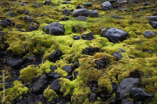 Fotografie, Obraz  Thick moss covering rocks in a field in Iceland