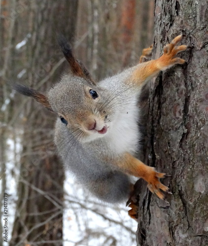 Funny squirrel in the park