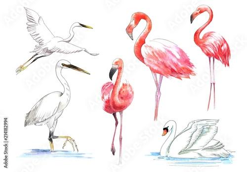 Canvas Prints Flamingo Bird Watercolor painted bird. The greater flamingo in color.