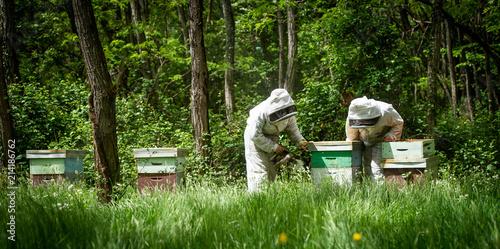 Photo Beekeeper working collect honey. Beekeeping concept.