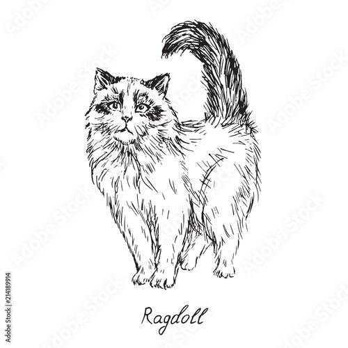 Valokuvatapetti Ragdoll, cat breeds illustration with inscription, hand drawn doodle, sketch, ou