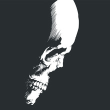 Side View Of A Skull On A Black Background