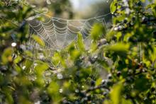 Spinnenweben Im Morgentau An Einem Sommermorgen