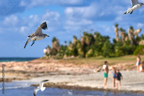 Fotografie, Obraz  Albatros spreading its wings flies against the background of the