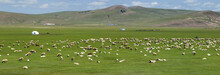 Sheep Grazing In The  Grassland Of Mongolia