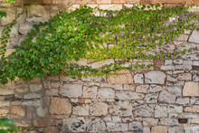 Background. Ivy On The Stone W...