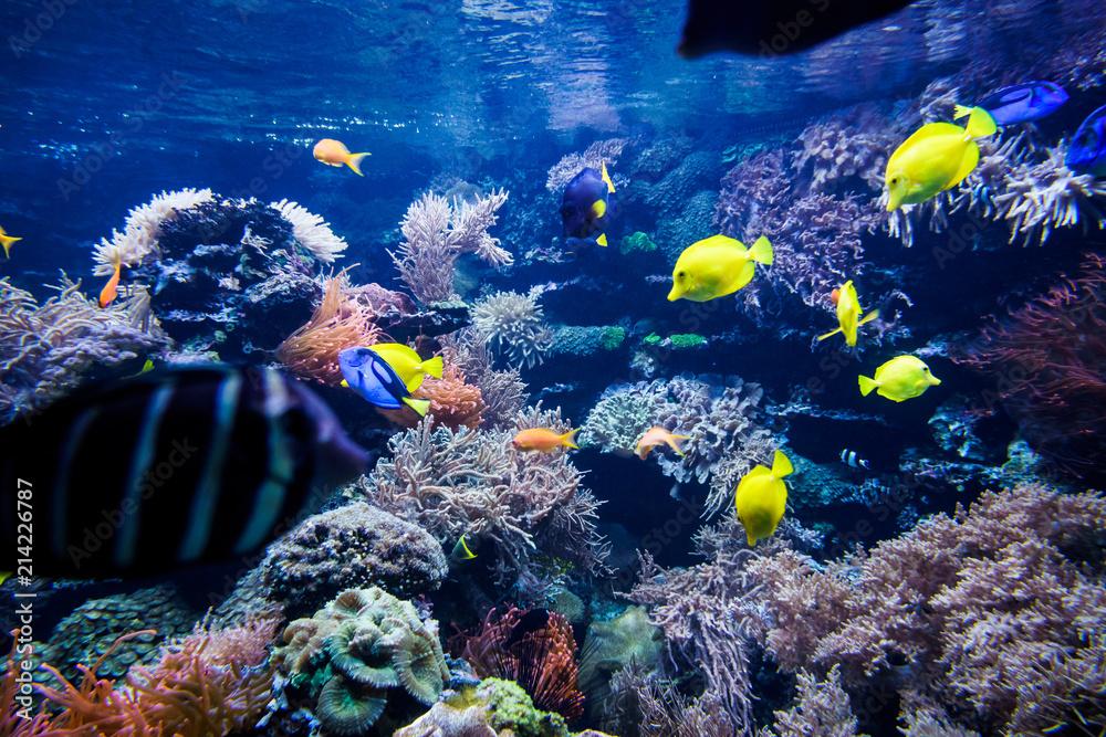Kolorowa Rafa Koralowa Z Ryba I Kamieniem 214226787