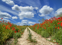 Poppy Trail