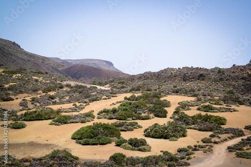 Slika na platnu Landscape of Teide National Park, Tenerife, with scrubland pockets of shrubs, broom and flowers on a sand base